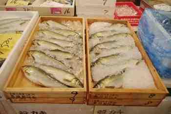 和歌山湯川水産掲載用.jpg